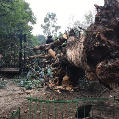 Lluvias dejan encharcamientos, tiran árboles y postes en CDMX