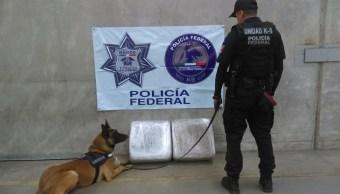 Aseguran 100 kilos de marihuana en empresa de paquetería en Edomex