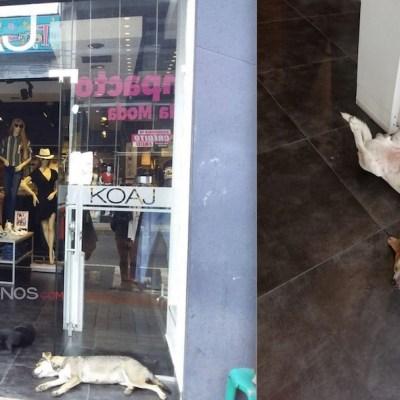 Tienda de ropa abre sus puertas para que perritos callejeros se protejan del calor