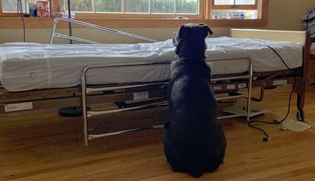 Foto Perrito espera a su dueño fallecido junto a la cama del hospital 25 junio 2019