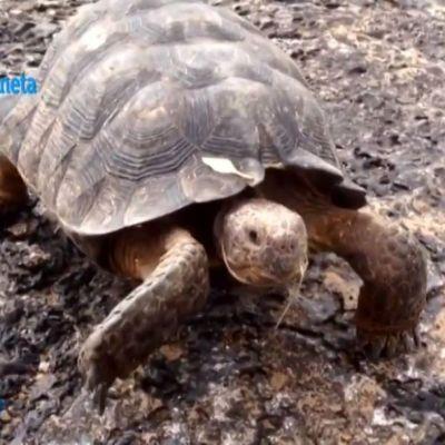 Víboras, tortugas y ardillas habitan en Sonora, la piel del desierto