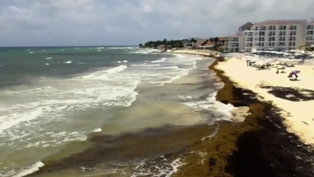 Foto: El sargazo afecta al Caribe mexicano, 24 de junio de 2019, México