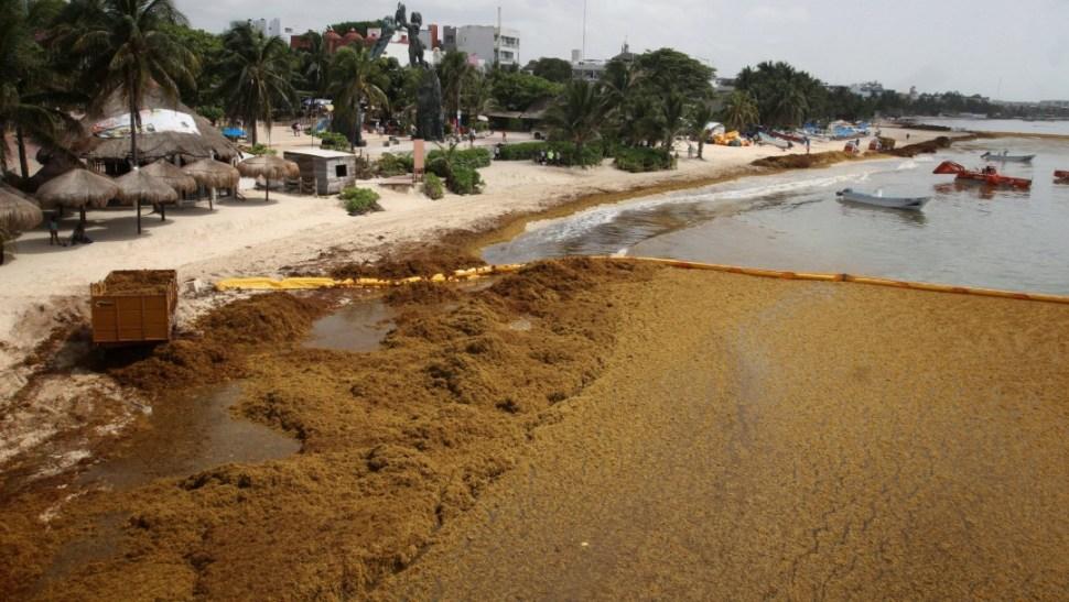 Foto: Sargazo afecta a Playa del Carmen, en Quintana Roo, 24 de junio de 2019, México