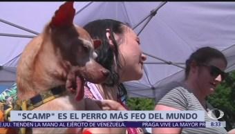 Scamp gana el concurso del perro más feo del mundo