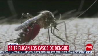 FOTO: Se triplican casos de dengue en Jalisco