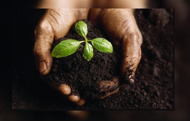 Foto:Entregan primeros fertilizantes gratuito a productores de Guerrero, 7 junio 2019