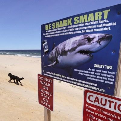 Una adolescente pierde la pierna tras un ataque de tiburón