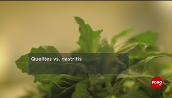 FOTO: UNAM descubre que quelites combaten la gastritis