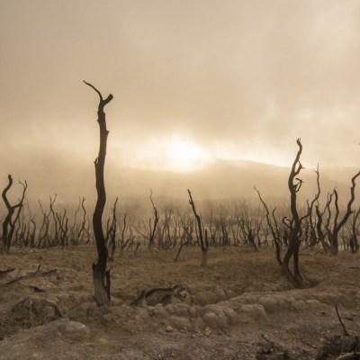 Quedan 18 meses para salvar la Tierra, según expertos en cambio climático