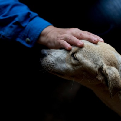 Tener perro te ayuda a mantener sano el corazón
