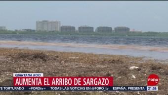 Foto: Aumenta Arribo Sargazo Costa Quintana Roo 11 Julio 2019
