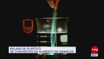 Bolsas de plástico que se convierten en alimento de animales
