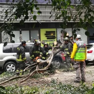 Cae árbol sobre dos vehículos en la colonia Juárez, CDMX