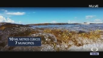 Foto: Comienza arribo excesivo de sargazo en la zona sur de Quintana Roo