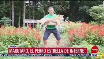 FOTO: Conoce los perros convertidos en celebridades en redes sociales, 21 Julio 2019