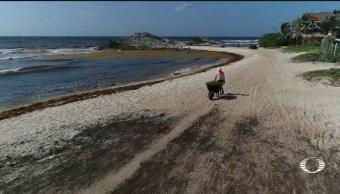 Foto: Recolección Sargazo Playas Tulum Playa Del Carmen 19 Julio 2019