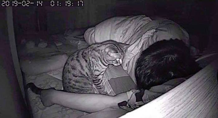 Foto Coloca cámara en su cuarto, descubre a su gato asfixiándolo mientras duerme 26 julio 2019