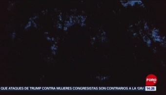 Luciérnagas alumbran bosques de Tlaxcala