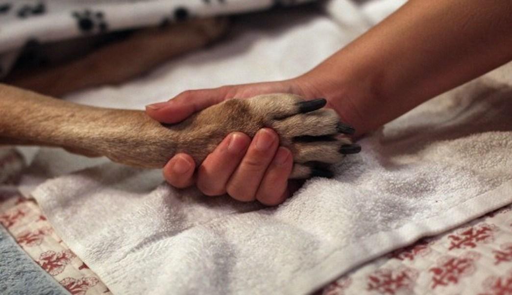 Foto se cambian de casa y dejan a sus perros encerrados, sin agua ni comida 14 julio
