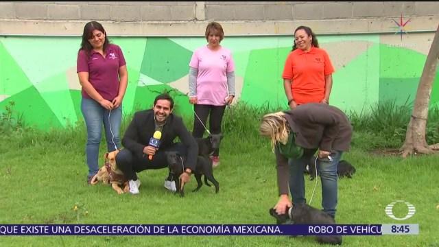 Metro CDMX rescata a perros y les busca hogar