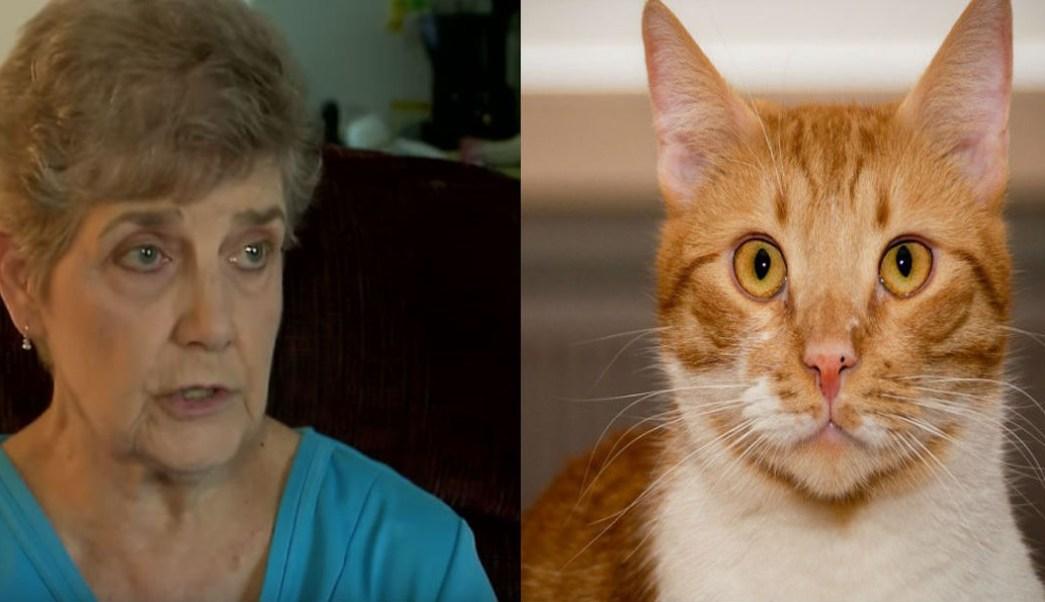 Foto Señora de 79 años irá a prisión por alimentar a gatos callejeros 31 julio 2019