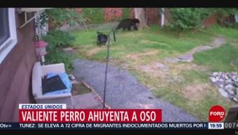 FOTO: Perro ahuyenta a un oso que estaba en una casa en EU, 14 Julio 2019