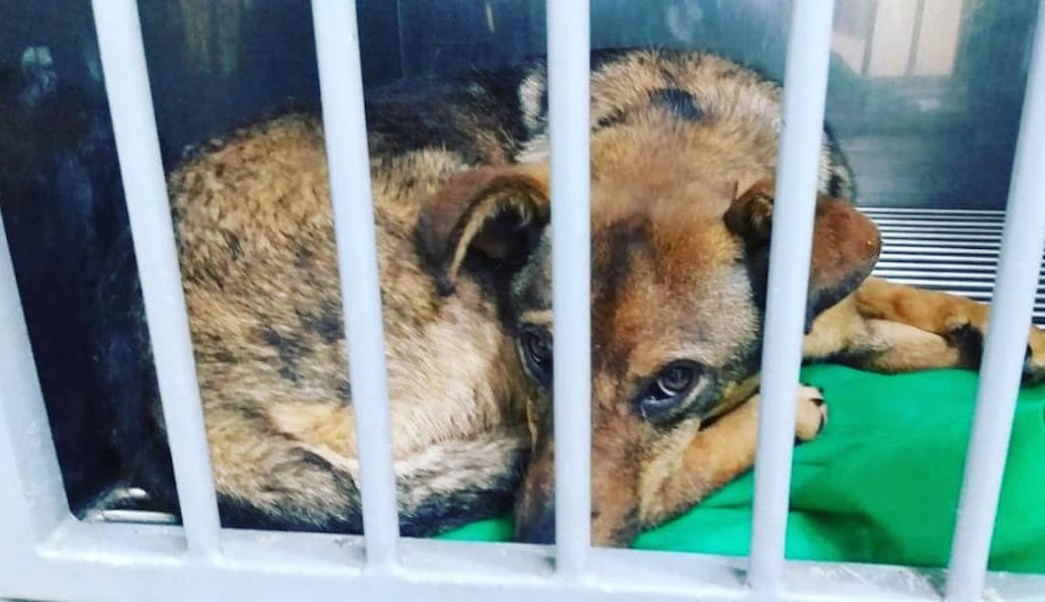 Foto donan alimento envenenado a refugios; mueren más de 20 perros 14 julio 2019