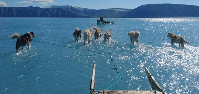 Perros caminan sobre agua por derretimiento de hielo en Groenlandia (Steffen Olsen)