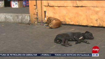 Foto: Rehabilitación Perros Callejeros Toluca Edomex 5 Julio 2019