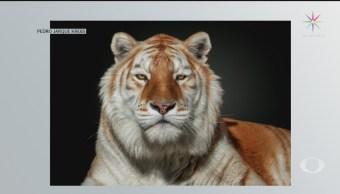 Foto: Retratos Fragilidad Mundo Animal Pedro Jarque 19 Julio 2019