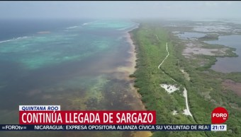 FOTO: Sargazo continúa afectando playas mexicanas, 7 Julio 2019
