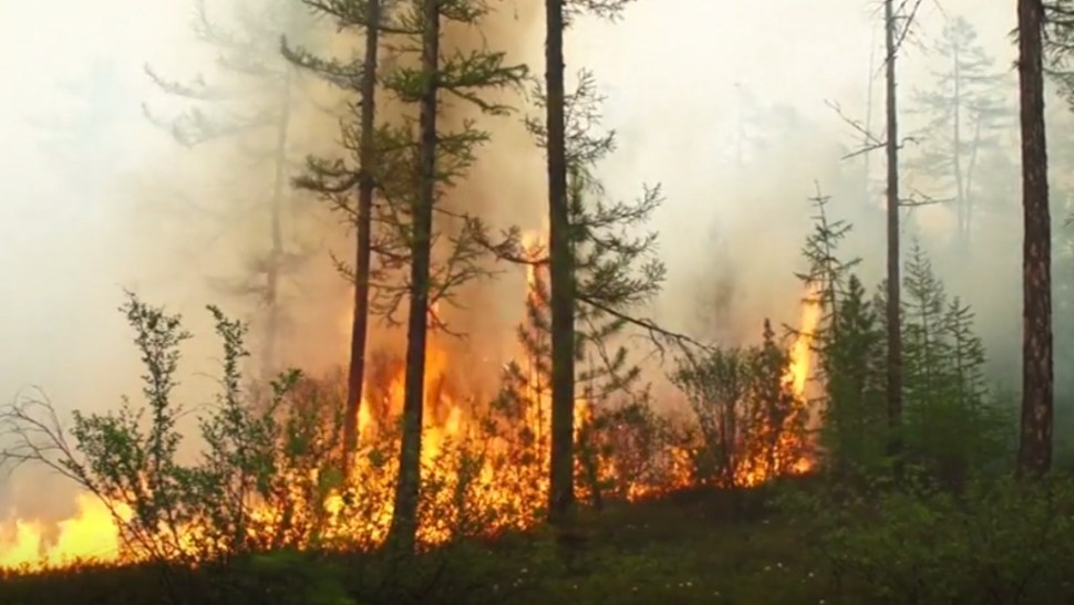Foto: Incendios forestales en Rusia, 26 de julio de 2019, Rusia