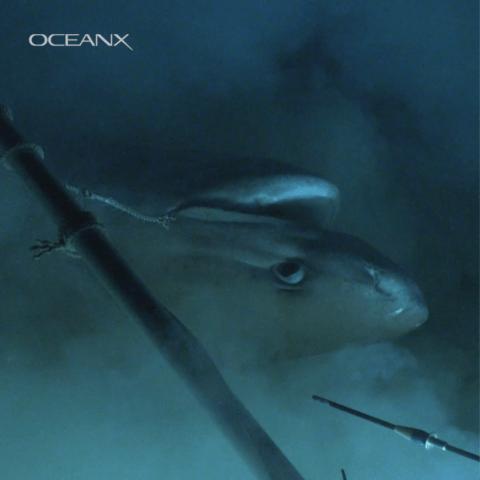 FOTO tiburon 9 JULIO 2019
