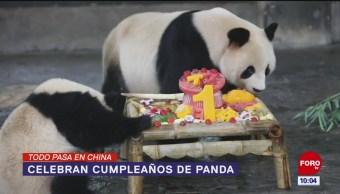 Todo Pasa En China: Celebran cumpleaños de panda