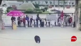 Todo Pasa En China: Se escapa chimpancé del zoológico