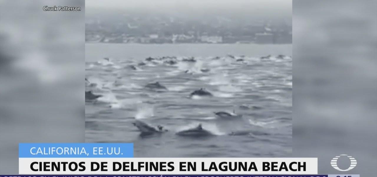 Video capta a cientos de delfines en Laguna Beach, California