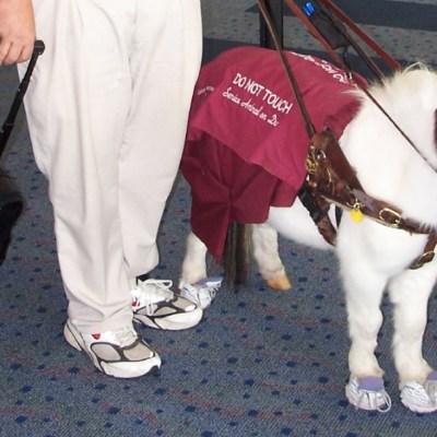 Caballos miniatura, perros y gatos, animales de compañía permitidos en aviones