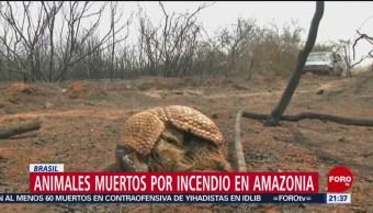 Foto: Animales Muertos Incendio Amazonas 27 Agosto 2019
