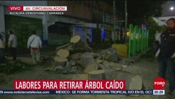 Foto: Cae Árbol Avenida Circunvalación Cdmx Hoy 21 Agosto 2019