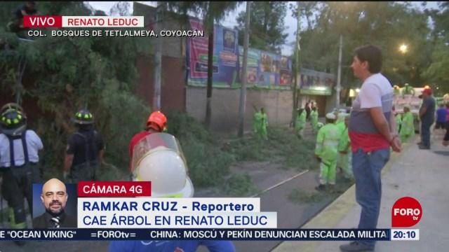 Foto: Cae Árbol Vehículo Coyoacán CDMX Hoy 20 Agosto 2019