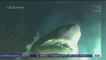 Captan en video a tiburón de peinetas