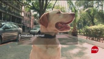 FOTO: Combaten el estrés de perros en la UNAM, 18 Agosto 2019