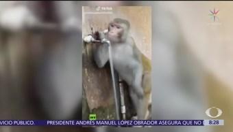 Mono educado toma agua y cierra la llave