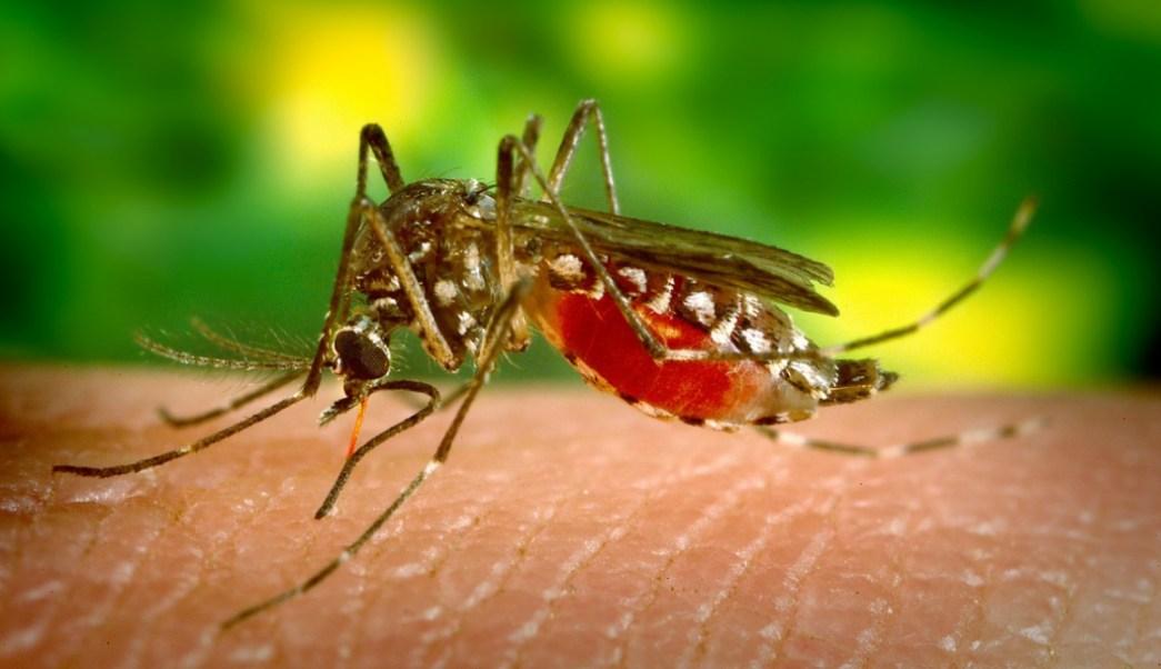 Foto:mosquito-mosquitos. 21 agosto 2019