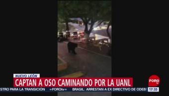 FOTO: Oso pasea por Facultad Ciencias Comunicación Nuevo León