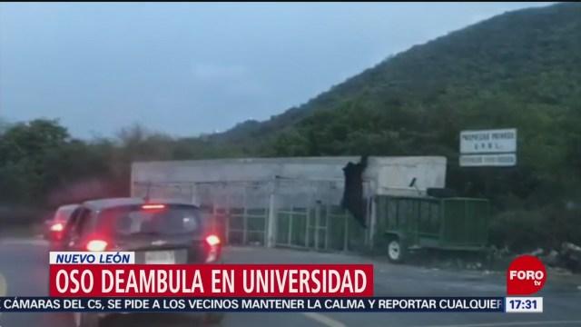 FOTO: Otro Oso Deambula UANL Nuevo León