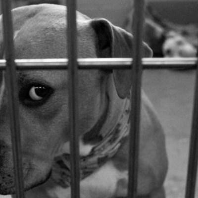 Prisión preventiva a hombre que estranguló y mató a un perro en Veracruz