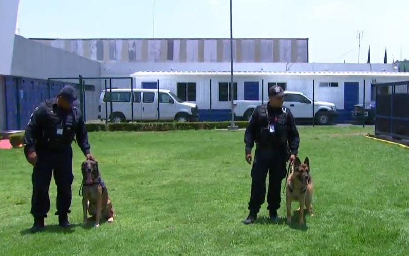 Perros de la Policía Federal, entrenados para buscar narcóticos
