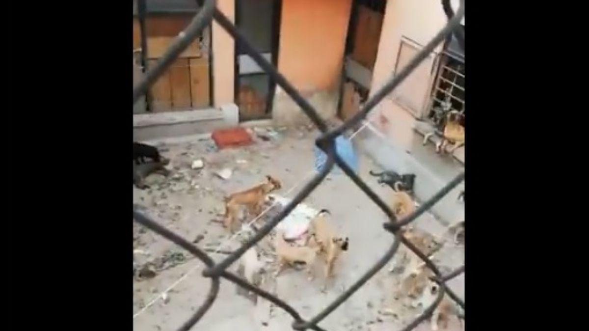 Foto: perros maltratados en Lindavista