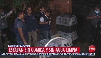 Foto: Rescatan Perros Abandonados Casa Lindavista Cdmx 7 Agosto 2019